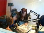 Eddy_Vaccaro@RadioEMA